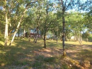 Location Lot, gites ruraux Lot chêne vert près de Cahors